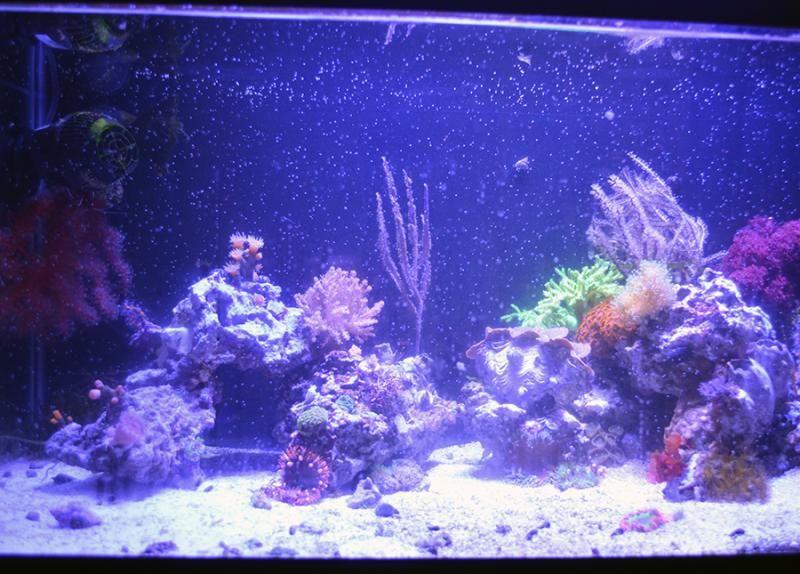 coralspawn1.jpg