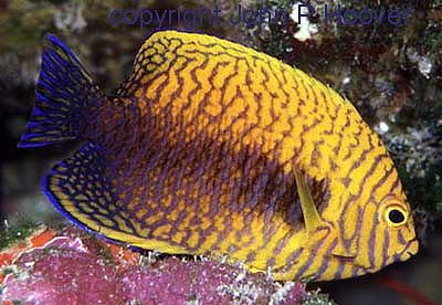 femalepotter-MakauOahu100ft_zps22c471e9.jpg